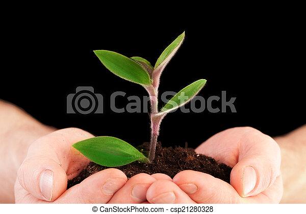planta, mãos - csp21280328