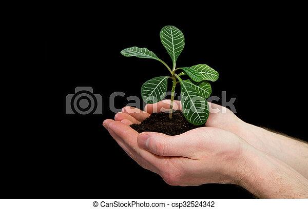 planta, mãos - csp32524342