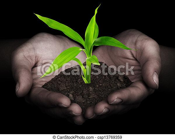planta, mãos - csp13769359