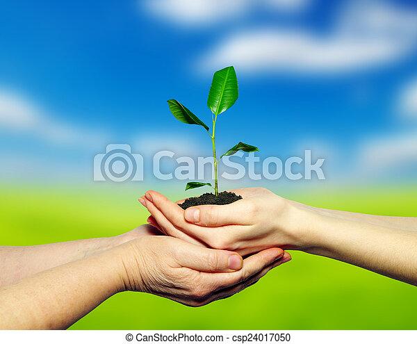 planta, mãos - csp24017050