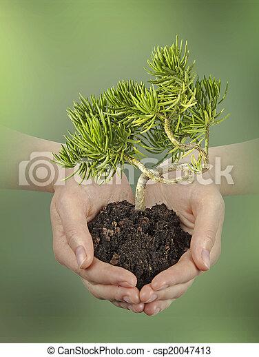 planta, mãos - csp20047413