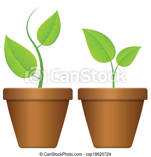 fondo., planta, maceta, blanco ilustración vectorial - buscar