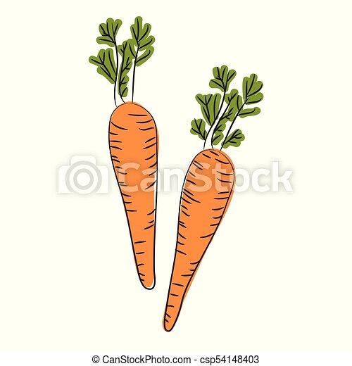 Dibujo De Zanahorias Silvestres Raiz Naranja Fresca De Zanahoria Con Hojas Verdes El Icono De La Planta De Zanahorias Para Canstock Partes que se usa de la zanahoria beneficios de la zanahoria: dibujo de zanahorias silvestres raiz