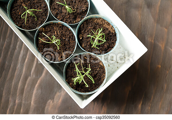 planta, potted - csp35092560