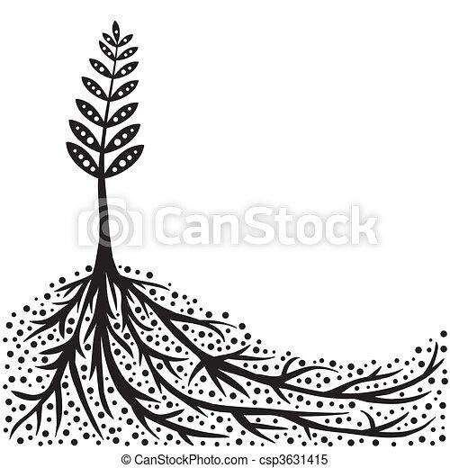 planta, raizes, fundo - csp3631415
