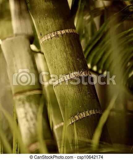 planta, verde, primer plano - csp10642174