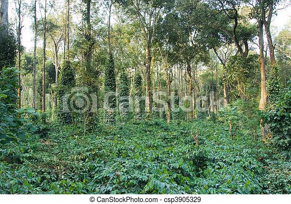 Una plantación de café india - csp3905329