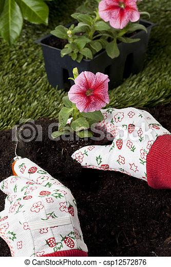 Plantar, flores. Cor-de-rosa, plantar, petunia, quintal ...