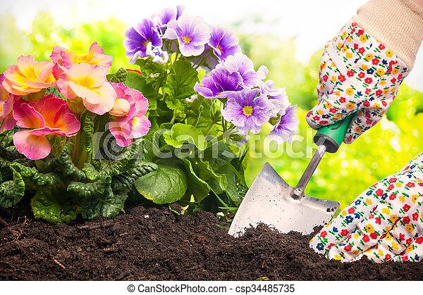 Plantar, flores, jardim. Plantar, jarda, costas, mãos,... estoque de ...