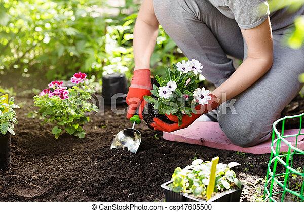 Plantar, jardim, photo., cima fim, flores, jardineiro.... estoque de ...