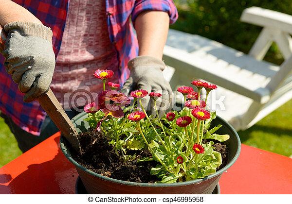 Plantar, mulher, flores, jardim. Plantar, flores, mulher,... estoque ...