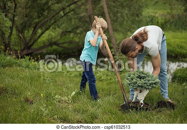 plantar, seu, pai, árvore, filho, park., adulto, ao ar livre, sorrindo - csp61032513