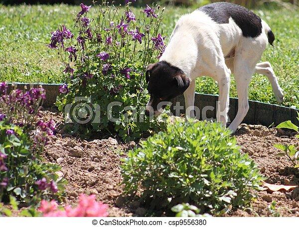 Plantas Comida Jard N Perro Negro Blanco Fotograf A