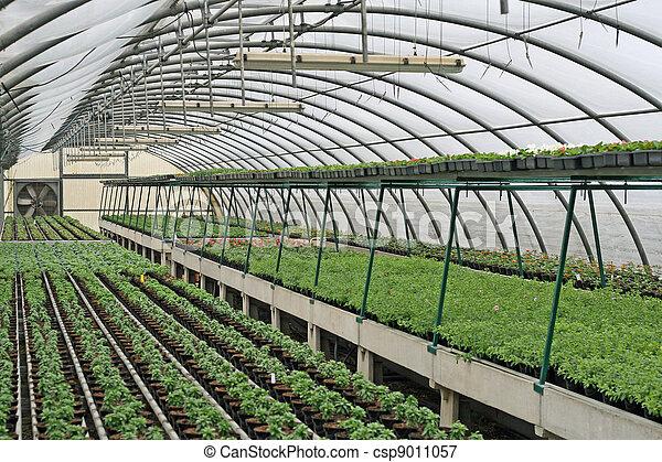 Plantas crecer interior invernadero crecer plantas for Plantas para invernadero