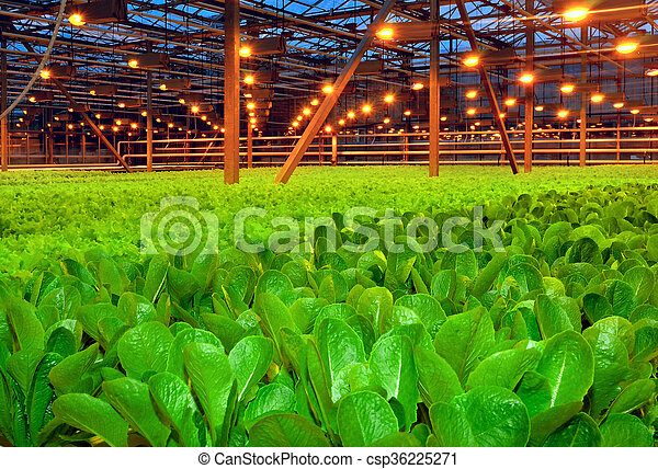 plantas, crescendo, jovem, estufa - csp36225271