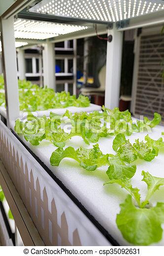 plantas, crescendo, pequeno, cultura, hydroponic - csp35092631