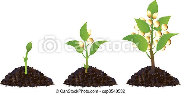 plantas, dinheiro, vida, processo - csp3540532