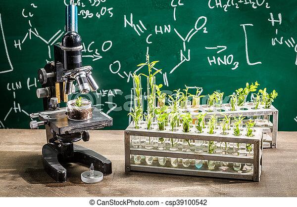 plantas, estudo, acadêmico, laboratório, crescendo, durante - csp39100542