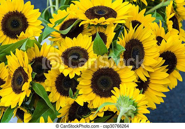 Plantas Flor Amarela Girassol Plantas Flores Flor Amarela