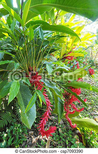 plantas, honduras - csp7093390