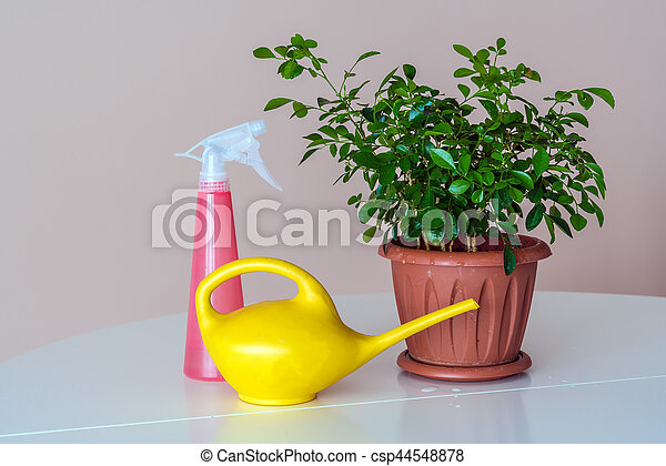 Plantas Interior Regar Flor Lata Rociador Plantas Interior - Plantas-interior-con-flor