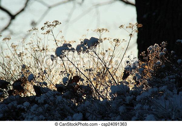 plantas, inverno, gelado - csp24091363