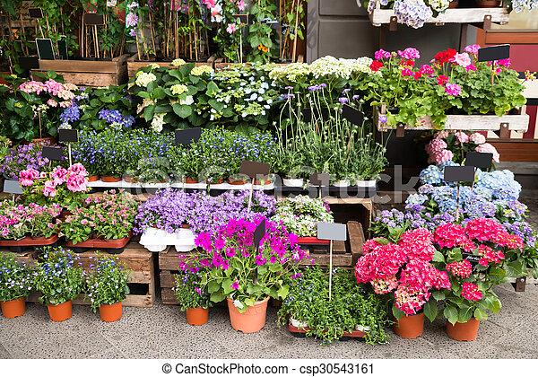 Plantas loja exterior flores plantas loja diferente Fotos de plantas de exterior