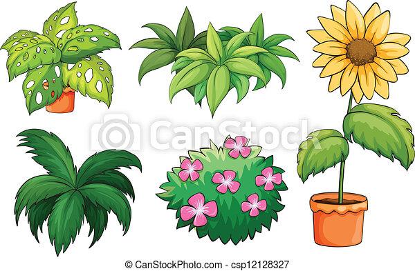 plantas, macetas. plantas, fondo blanco, ilustración
