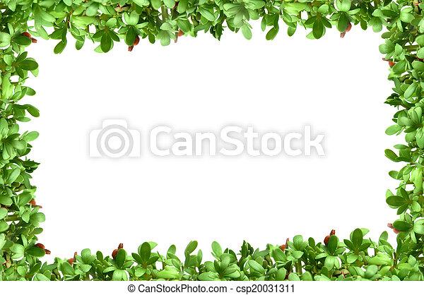 Plantas marco cress plano de fondo fresco blanco frontera - Marcos para plantas ...