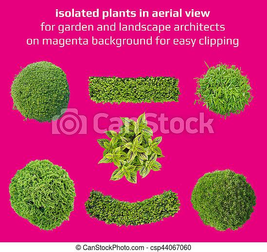 Plantas a la vista para recortar fácil - csp44067060