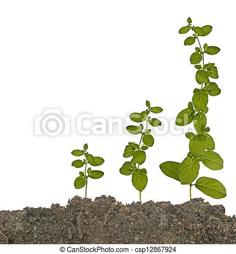plantas, solo - csp12867924