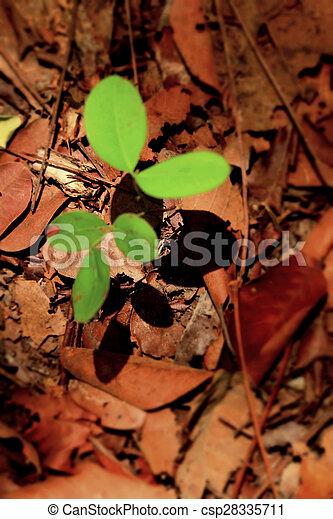 plantas, solo - csp28335711