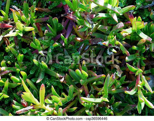 Textura de plantas - csp36596446