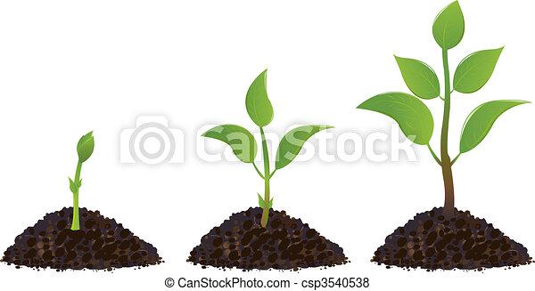 plantas, verde, joven - csp3540538