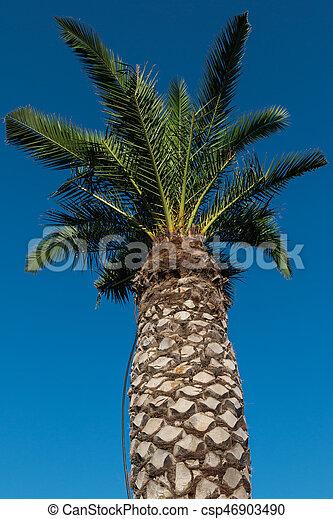 La vegetación de las plantas de palma verde - csp46903490
