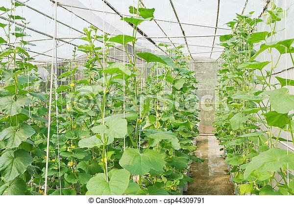 plantation ferme serre melon plantation greenhouse photographies de stock rechercher. Black Bedroom Furniture Sets. Home Design Ideas