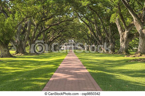 plantation, ruelle, chêne - csp9850342