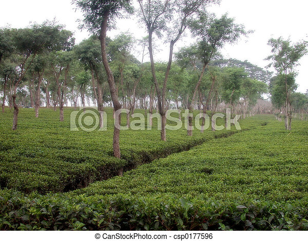 Plantation - csp0177596