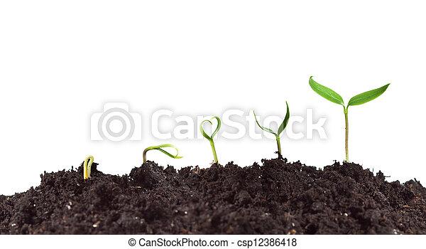 plante, croissance, germination - csp12386418