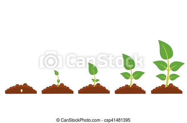 Plante Croissance Phases