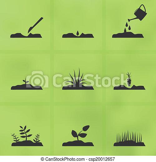 plante, ensemble, seeds., comment, étapes, grandir, icône - csp20012657