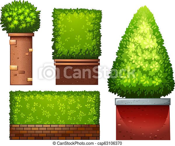 plante, ensemble, vert - csp63106370