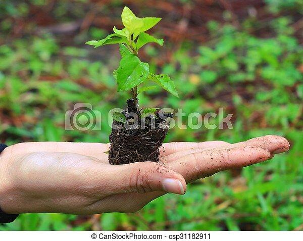 plante, femme, fond, nature, sur, tenant mains - csp31182911