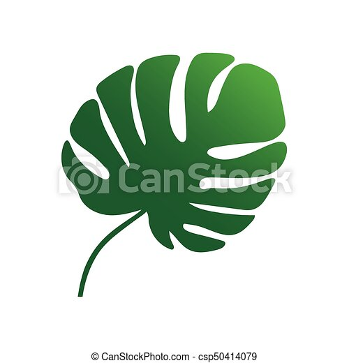 plante feuille arbre monstera exotique paume feuille illustration vecteurs. Black Bedroom Furniture Sets. Home Design Ideas