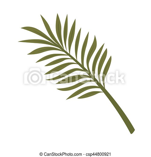 Plante feuille isol foug re exotique arri re plan for Plante 9 feuilles