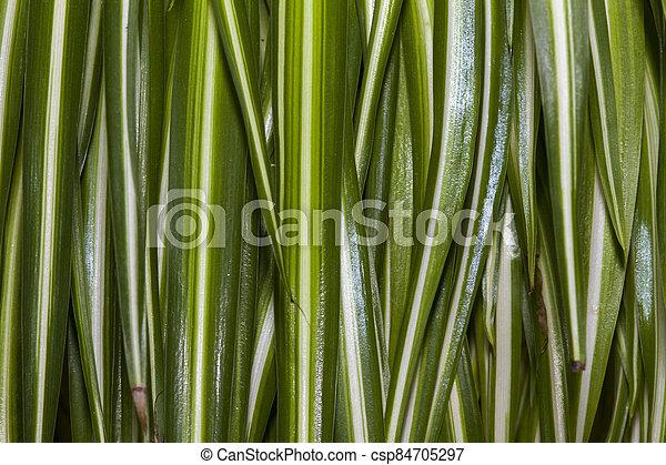 Plante Feuille Verte Fond Feuille Plante Verte Tombante Lignee Rayee Canstock