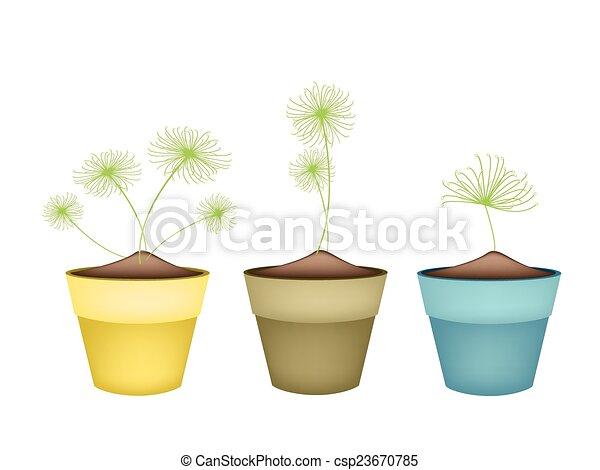 Plante Fleur Céramique Pots Papyrus Cyperus