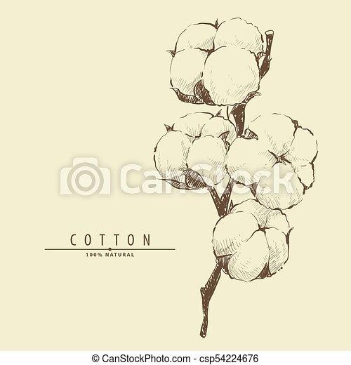 Plante Fleur Coton Dessine Plante Fleur Main Coton