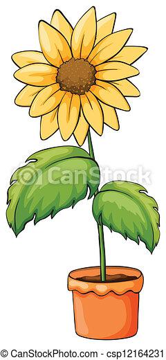 plante, fleurir pot - csp12164231