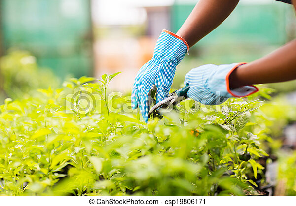 plante, jardinier, émondage - csp19806171